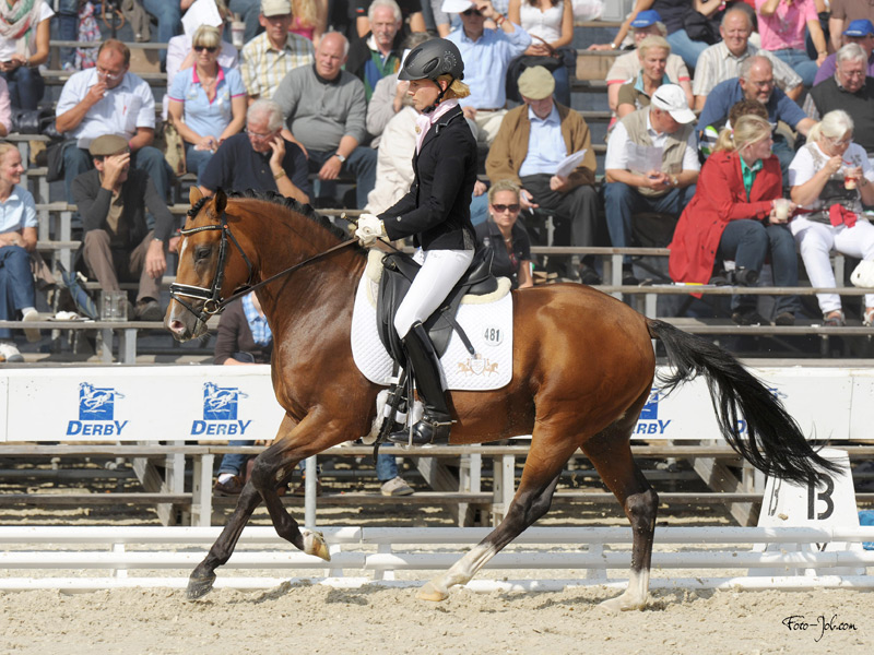 AEA Hilken's Crown Prince performing at Bundeschampionarte where he placed 7th.