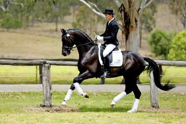 AEA Tuschinski placed 2nd at Aust National Champs 2012!!