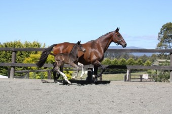 Lucinda with her beautiful foal by AEA Tuschisnki. Lucinda sold in the online auction