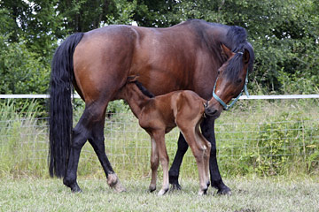 AEA Burong mare and foal in a paddock